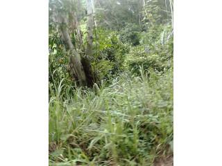 Location parcelle 02 hectares à Anyama-Téké