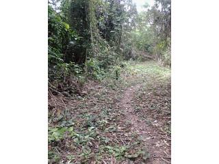 Parcelle agricole 02 hectares à Abié
