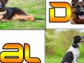 location-chiens-de-garde-avec-maitre-chien-small-2