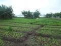 cocody-golf4-en-bordure-de-leau-vente-terrain-2664m2-cloture-small-2