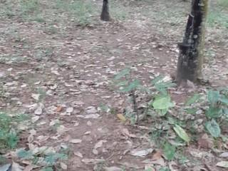 PARCELLE DE 6 HA EN VENTE A 8 KM DE BONOUA