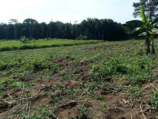 Vente de terrain a Songon