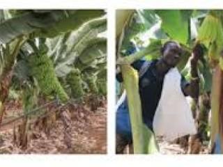Vente de produits agricoles